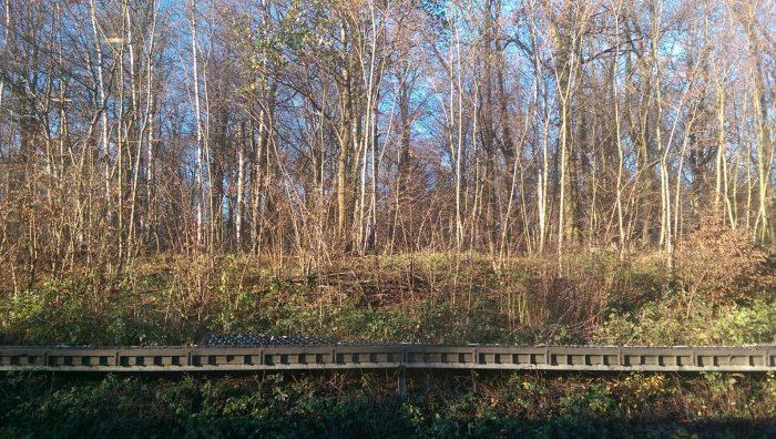 Grübeln an der Bahnböschung bei Braunschweig