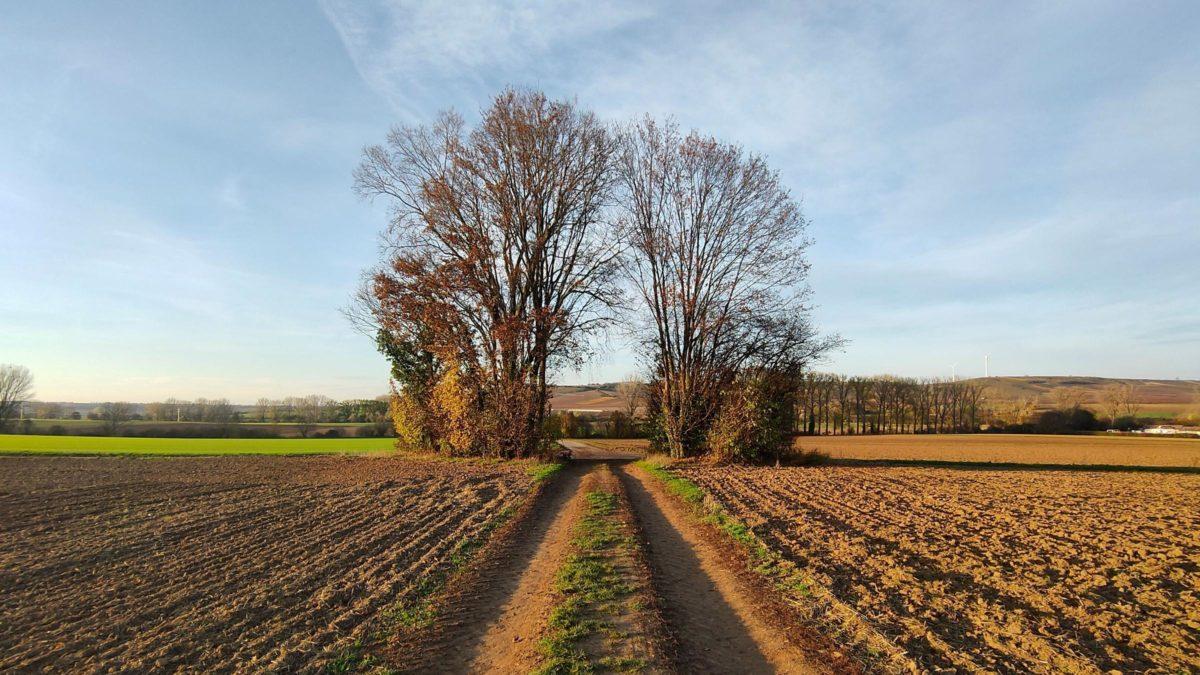 Bei Hahnheim auf dem Via Natura